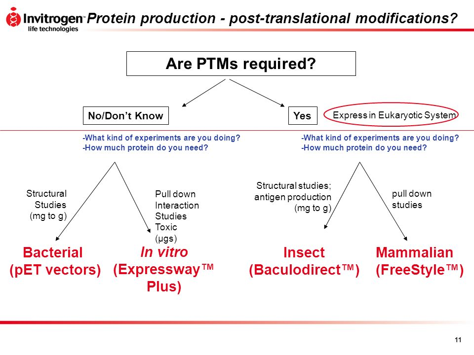 Protein production - post-translational modifications