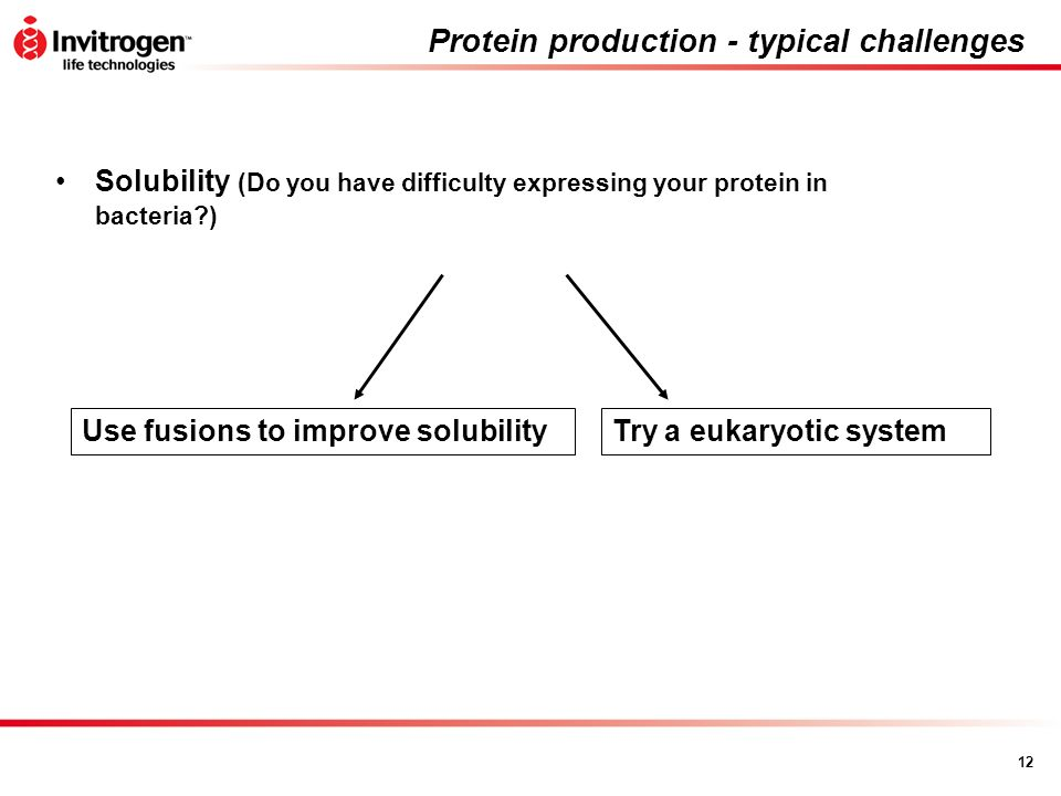 Protein production - typical challenges