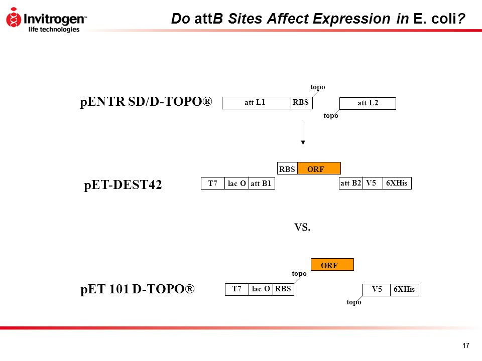 Do attB Sites Affect Expression in E. coli