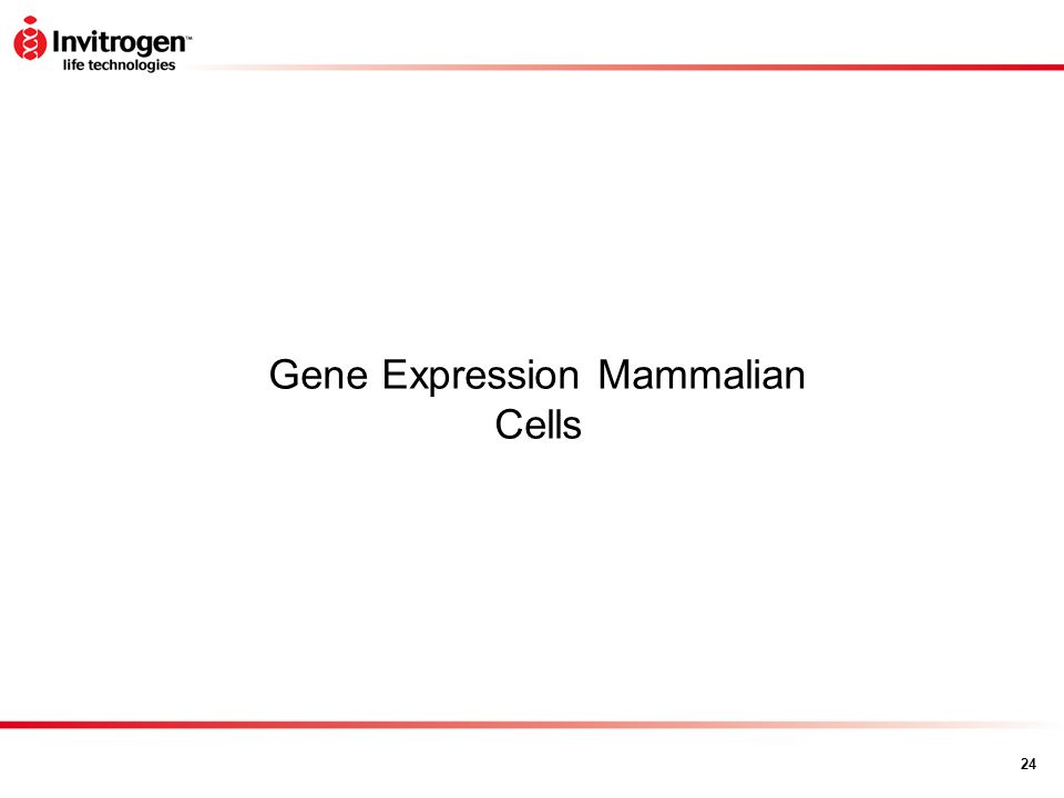 Gene Expression Mammalian Cells