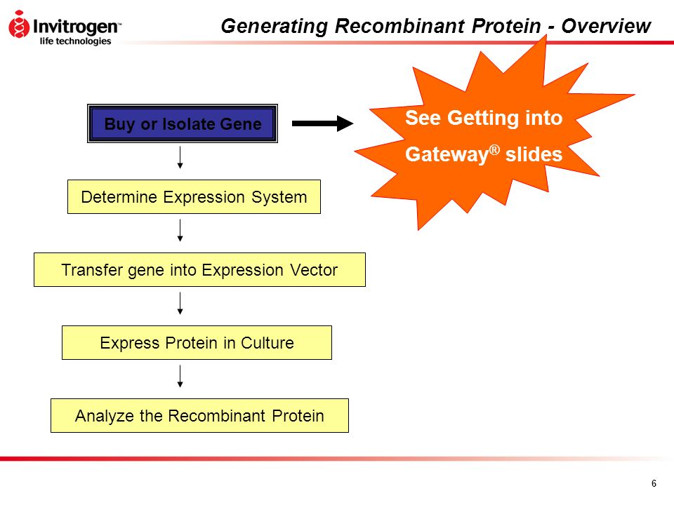 Generating Recombinant Protein - Overview