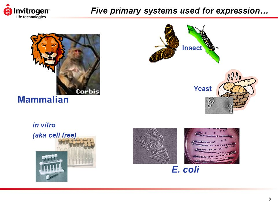 Five primary systems used for expression…