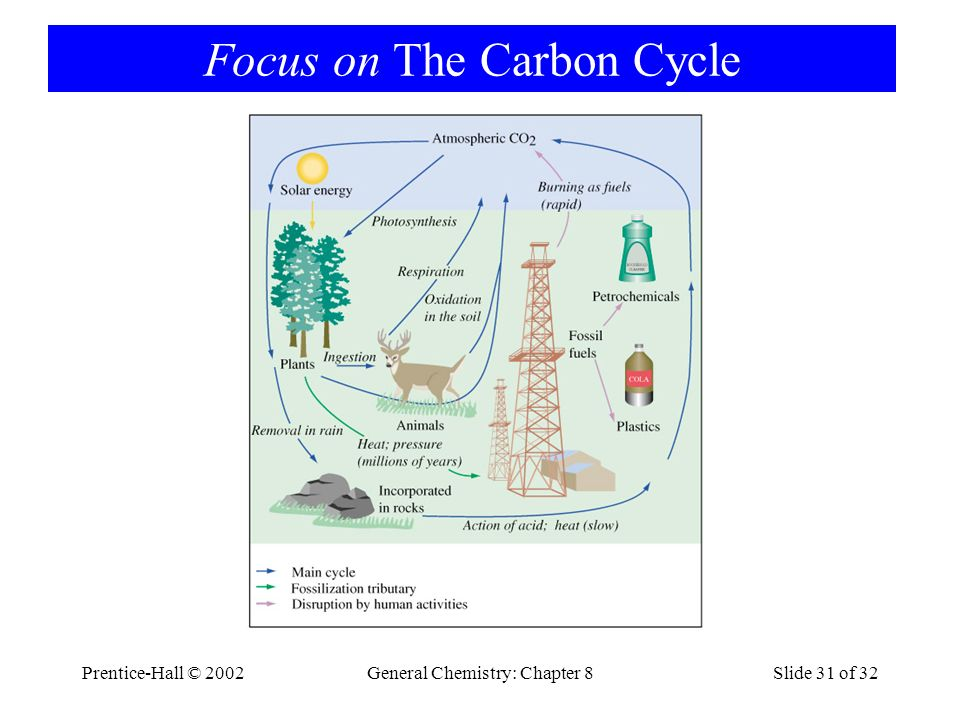 Focus on The Carbon Cycle