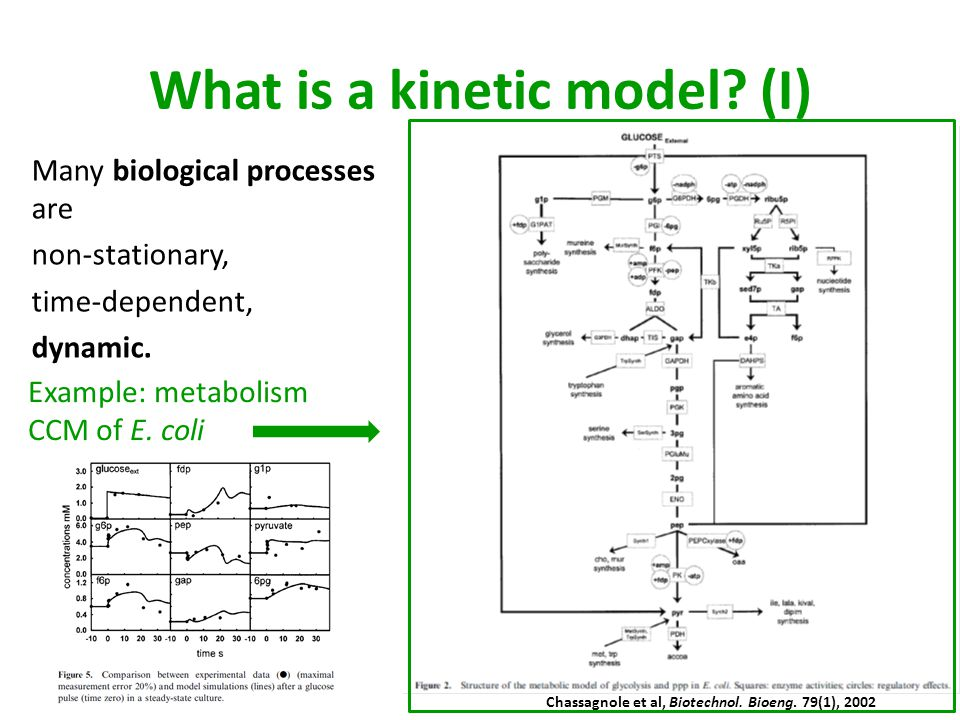 What is a kinetic model (I)
