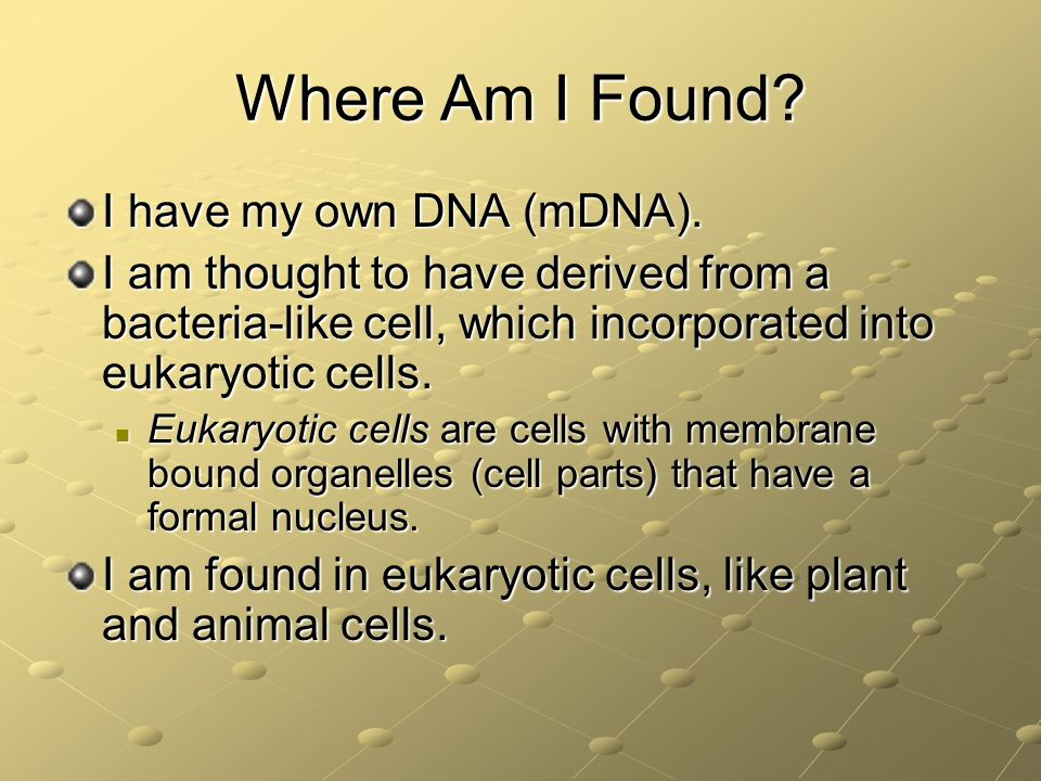Where Am I Found I have my own DNA (mDNA).
