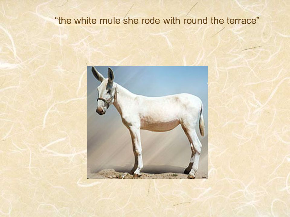 the white mule she rode with round the terrace