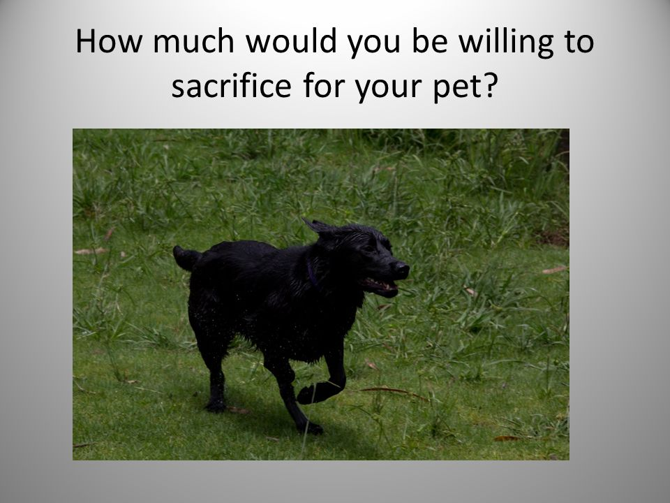 How much would you be willing to sacrifice for your pet