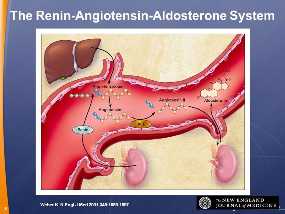 The Renin-Angiotensin-Aldosterone System