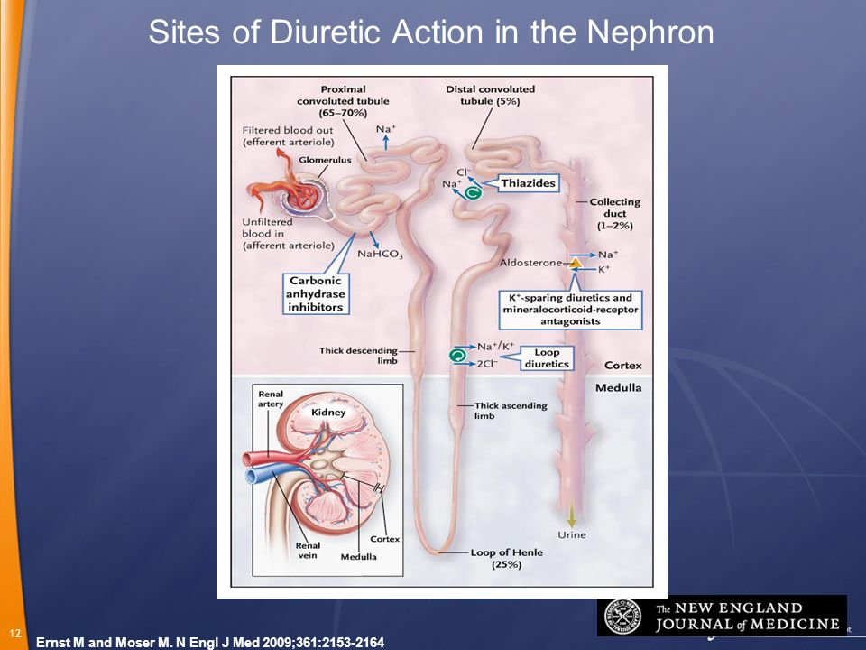 Sites of Diuretic Action in the Nephron