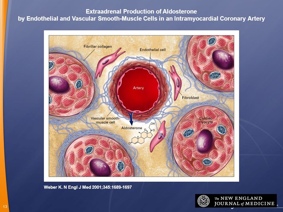 Extraadrenal Production of Aldosterone
