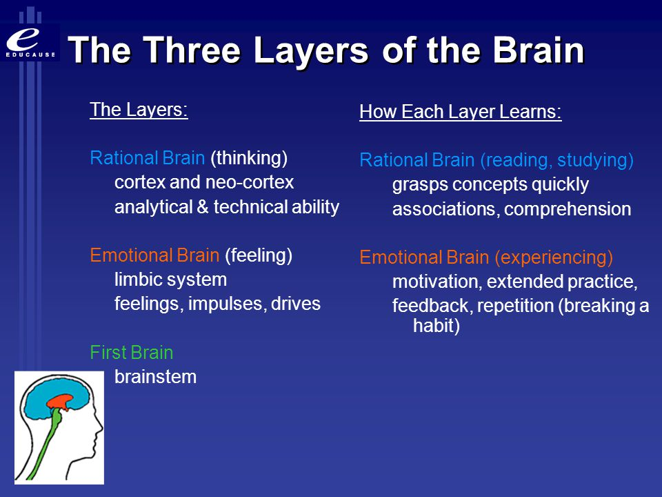 The Three Layers of the Brain
