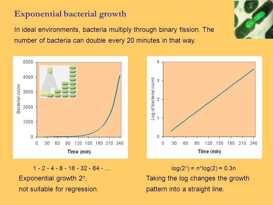 Exponential bacterial growth