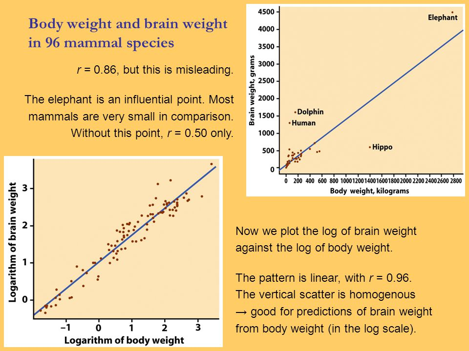 Body weight and brain weight in 96 mammal species