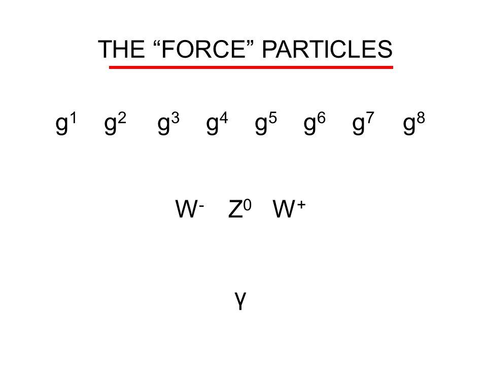 THE FORCE PARTICLES g1 g2 g3 g4 g5 g6 g7 g8 W- Z0 W+ γ