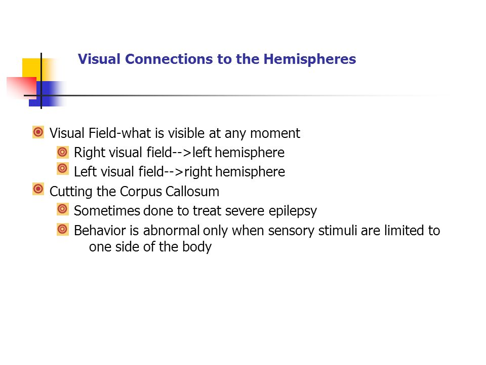 Visual Connections to the Hemispheres
