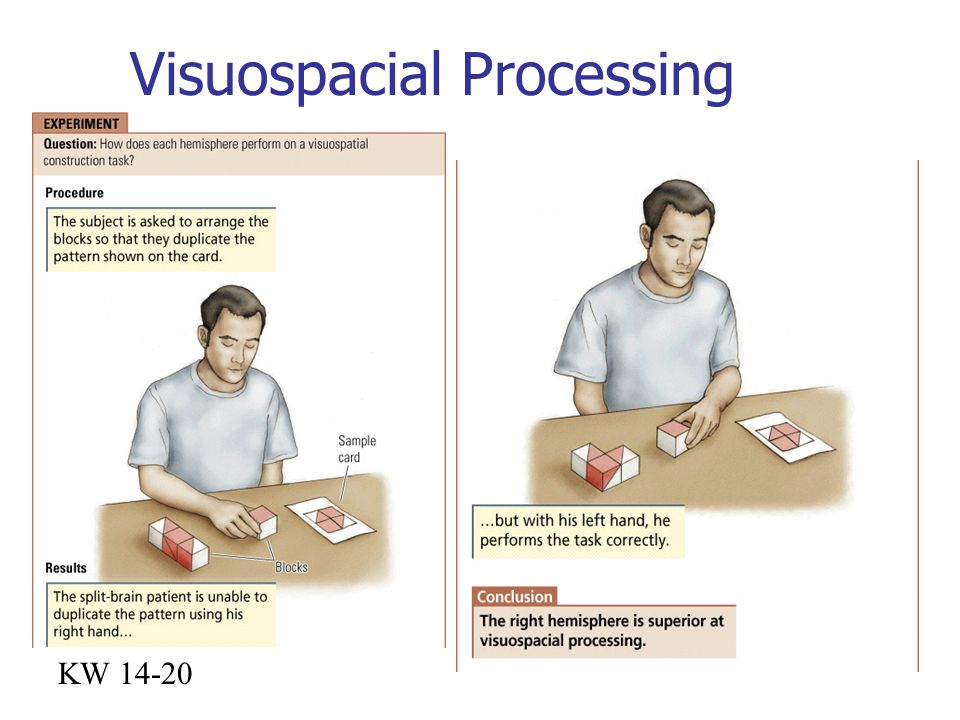 Visuospacial Processing