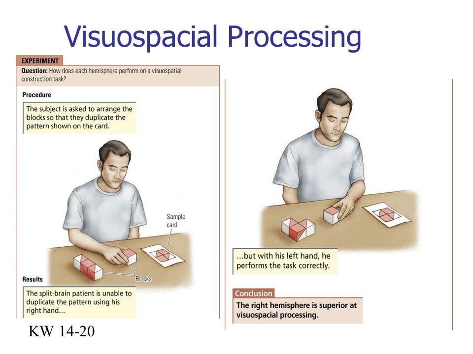 Visuospacial Processing