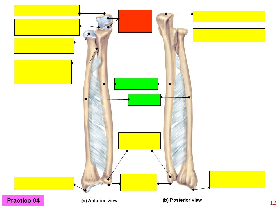 Practice 04 (a) Anterior view (b) Posterior view 12