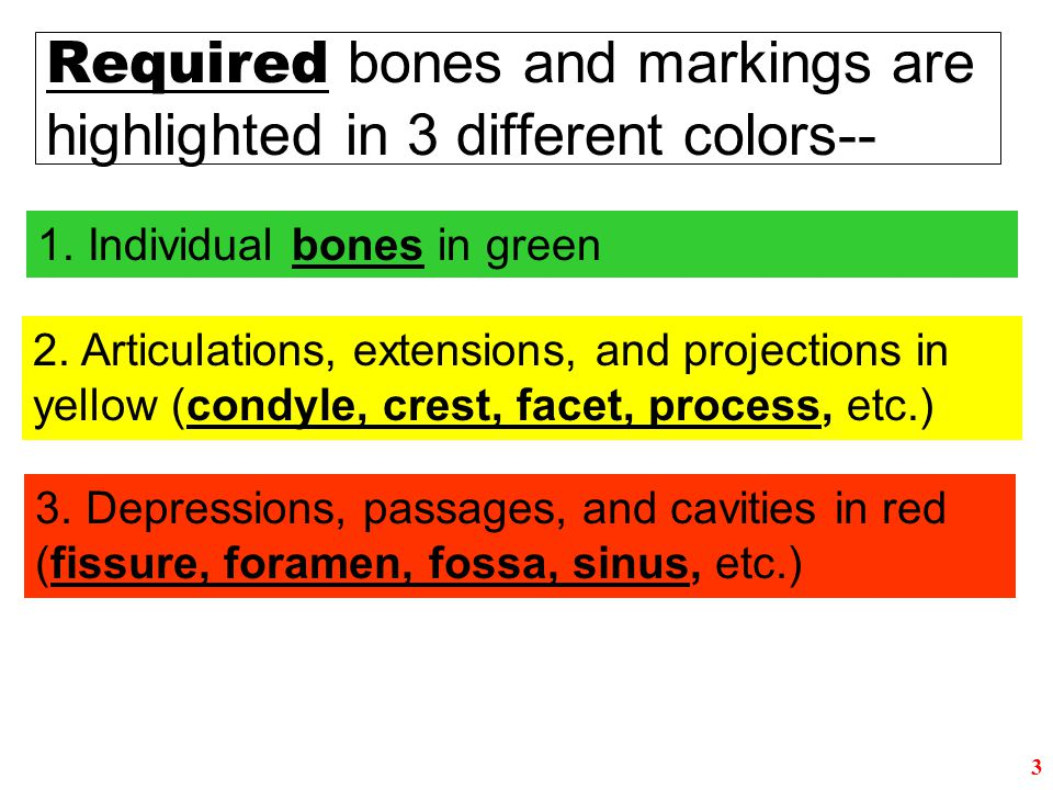 Required bones and markings are highlighted in 3 different colors--