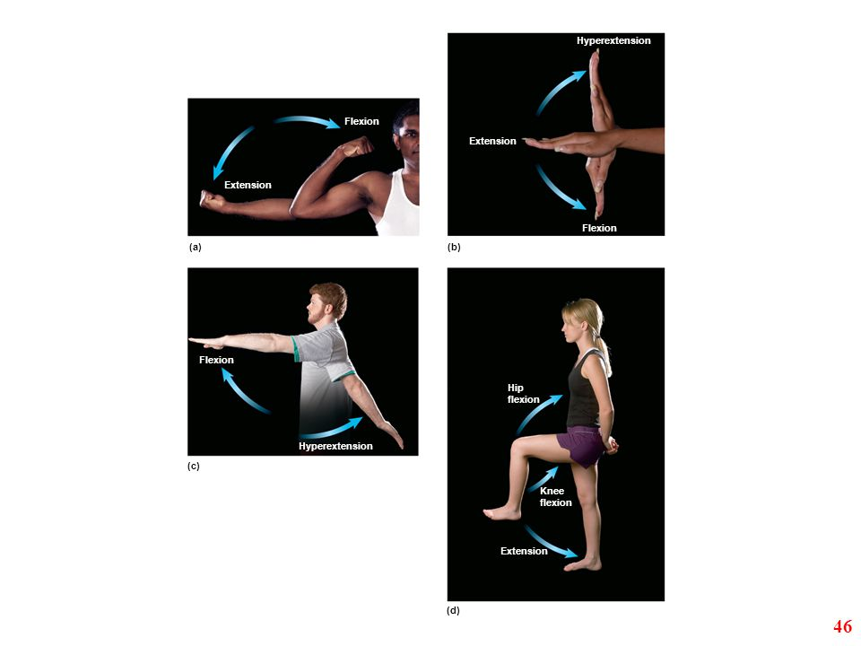 46 Hyperextension Flexion Extension Extension Flexion (a) (b) Flexion