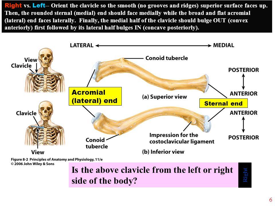 left clavicle - photo #46
