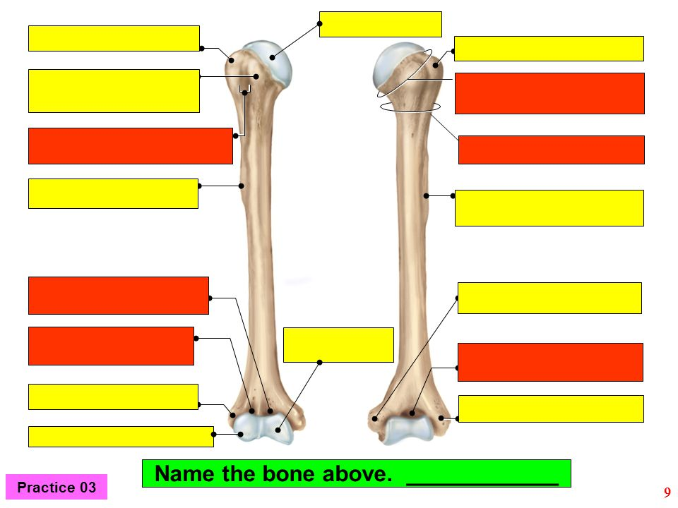 Name the bone above. ____________