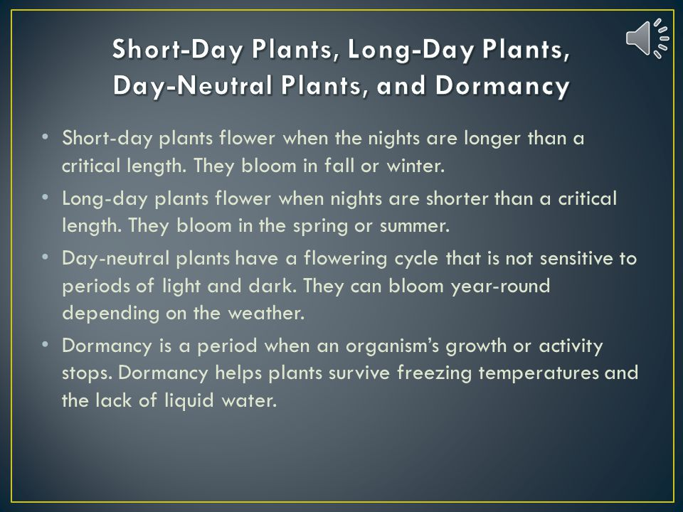 Short-Day Plants, Long-Day Plants, Day-Neutral Plants, and Dormancy