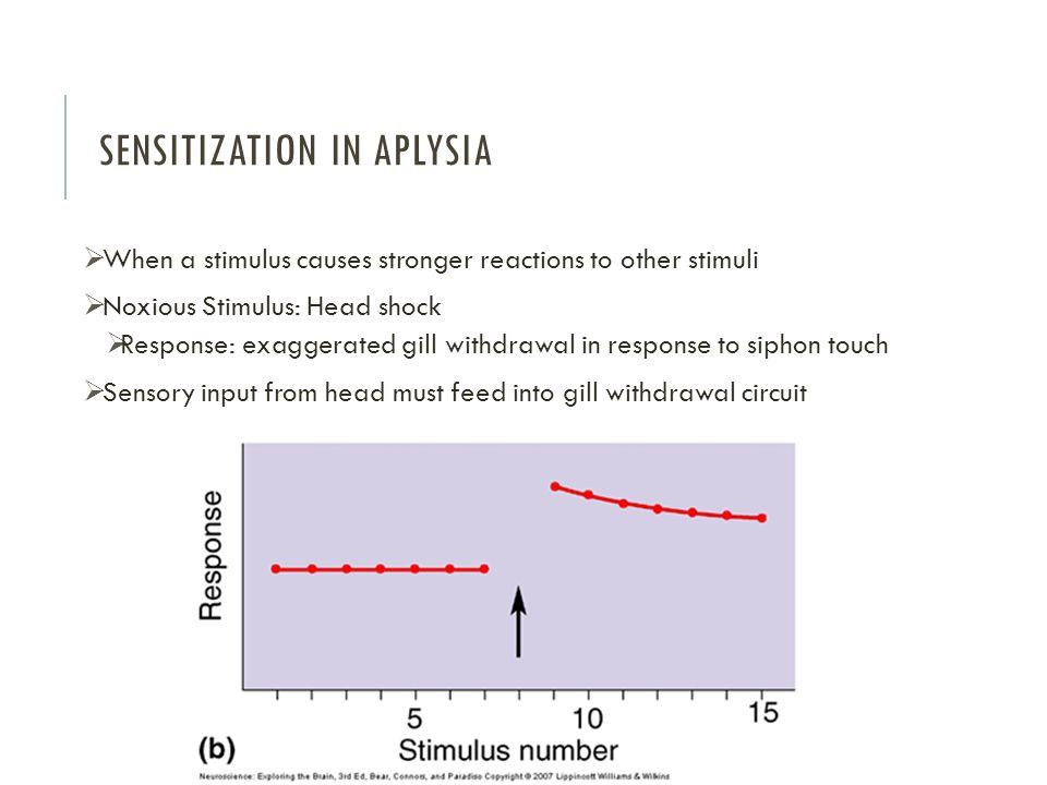 Sensitization in Aplysia