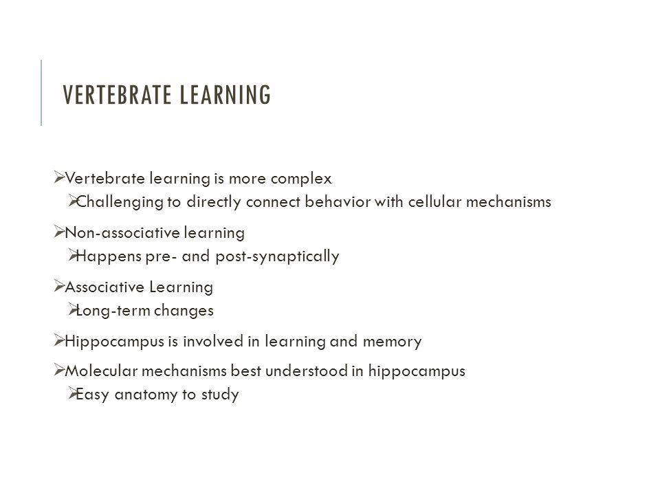 Vertebrate Learning Vertebrate learning is more complex