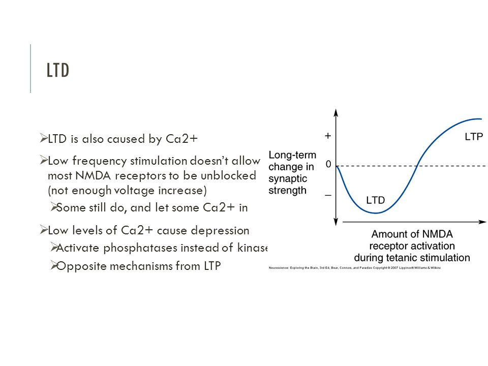 LTD LTD is also caused by Ca2+