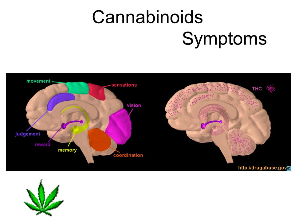 Cannabinoids Symptoms