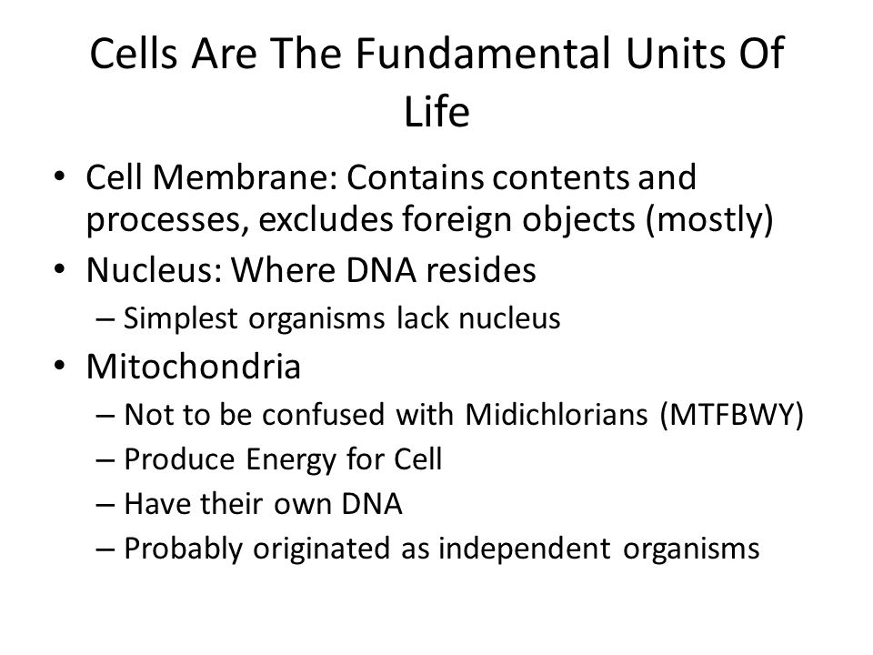 Cells Are The Fundamental Units Of Life