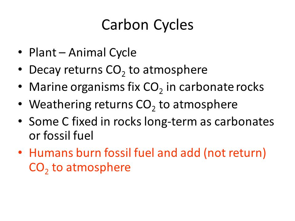 Carbon Cycles Plant – Animal Cycle Decay returns CO2 to atmosphere
