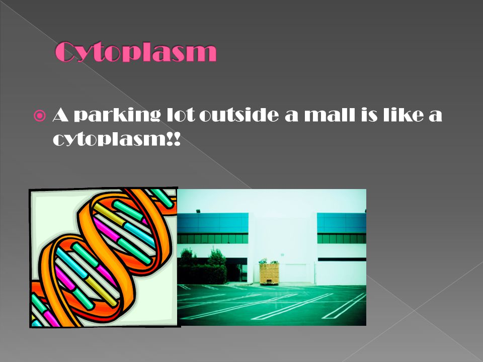 Cytoplasm A parking lot outside a mall is like a cytoplasm!!