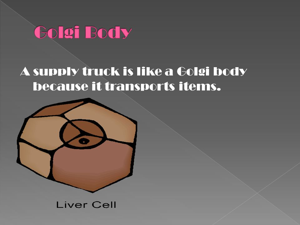 Golgi Body A supply truck is like a Golgi body because it transports items.