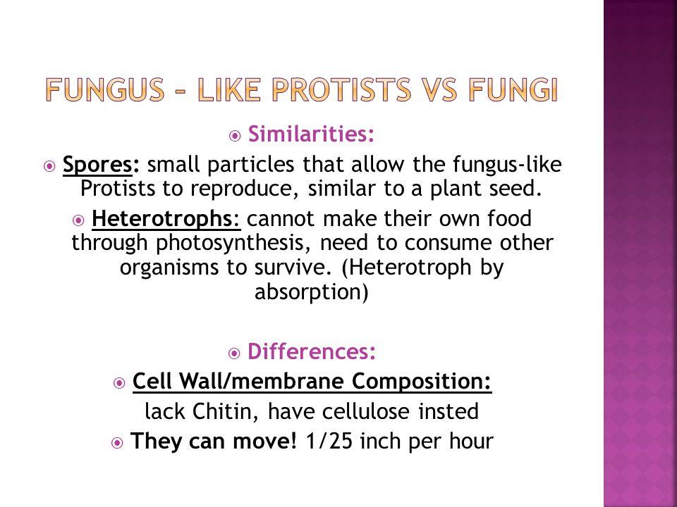 Fungus – Like Protists Vs Fungi