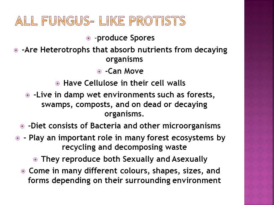 All Fungus- Like Protists