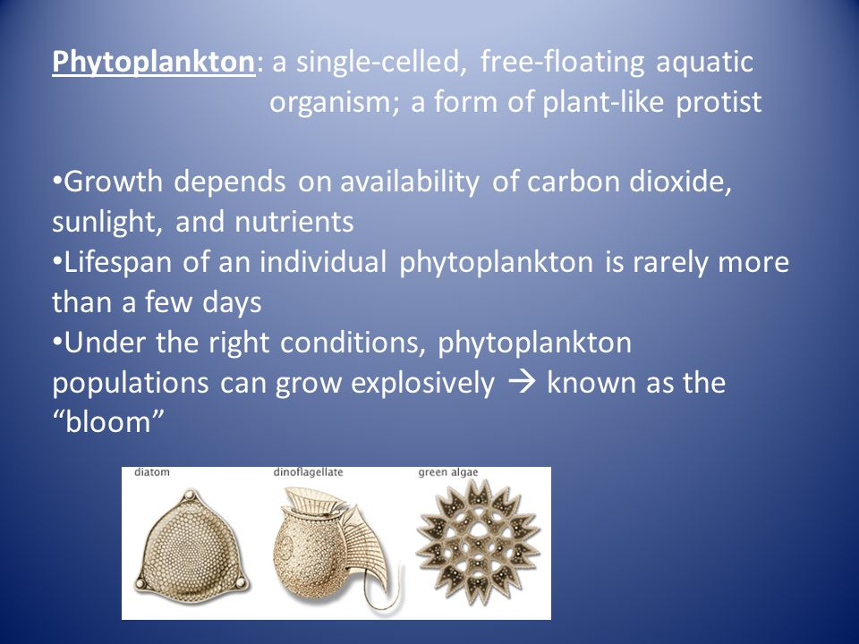 Phytoplankton: a single-celled, free-floating aquatic