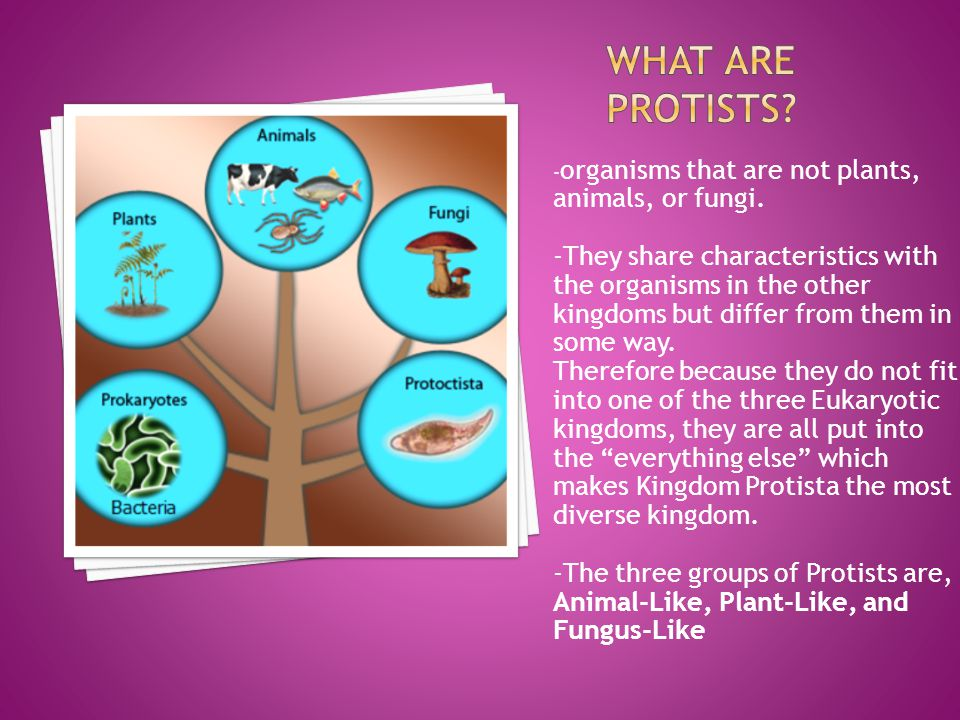 What Are Protists -organisms that are not plants, animals, or fungi.