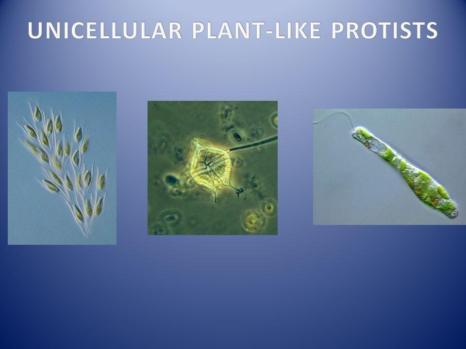 UNICELLULAR PLANT-LIKE PROTISTS