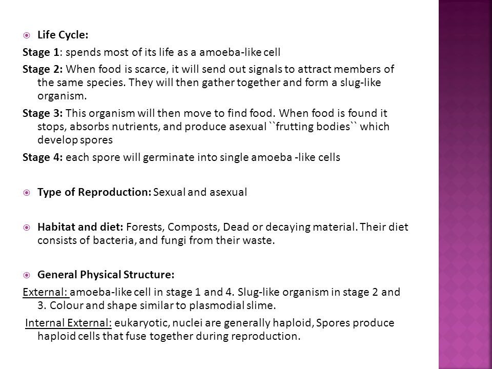 Life Cycle: Stage 1: spends most of its life as a amoeba-like cell.