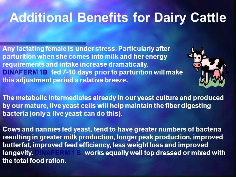 Additional Benefits for Dairy Cattle