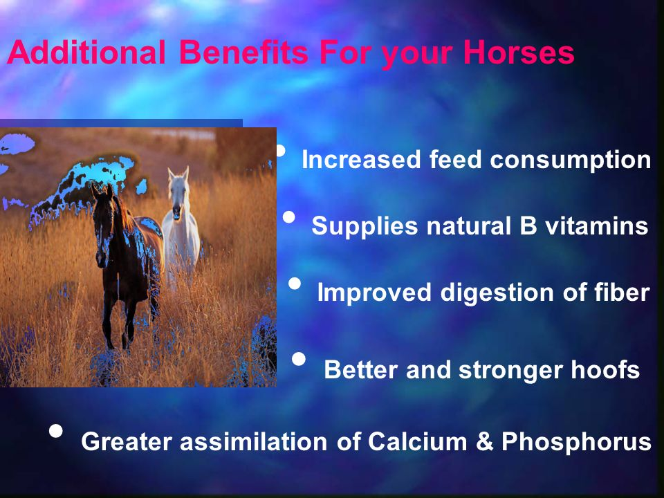 Better and stronger hoofs Greater assimilation of Calcium & Phosphorus