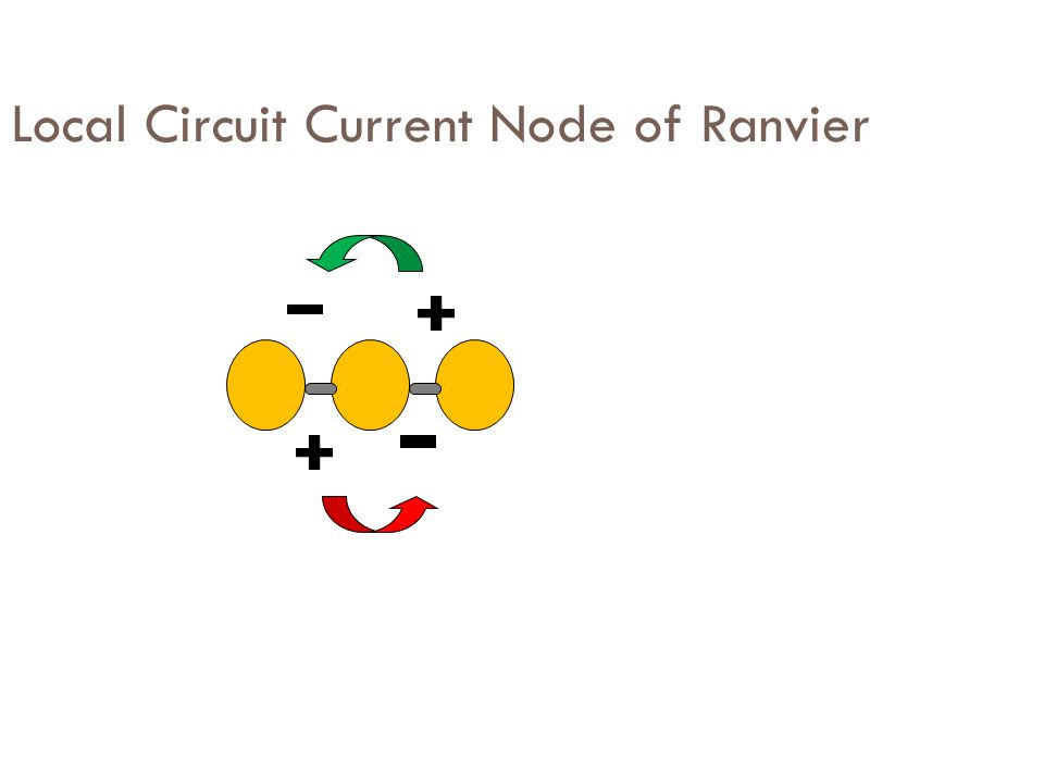Local Circuit Current Node of Ranvier