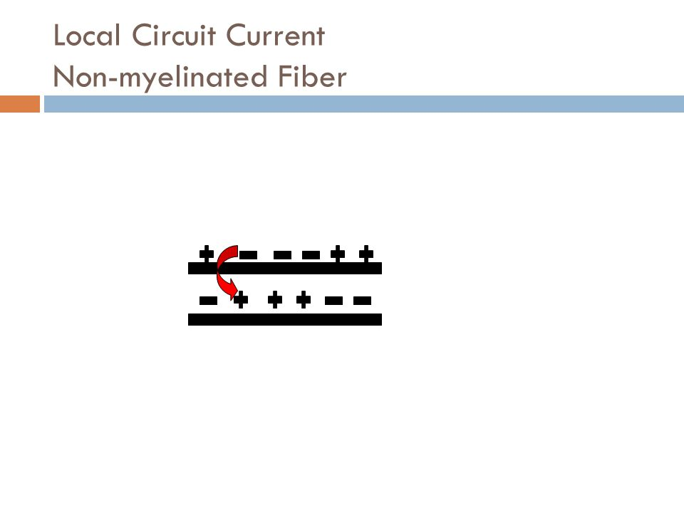 Local Circuit Current Non-myelinated Fiber