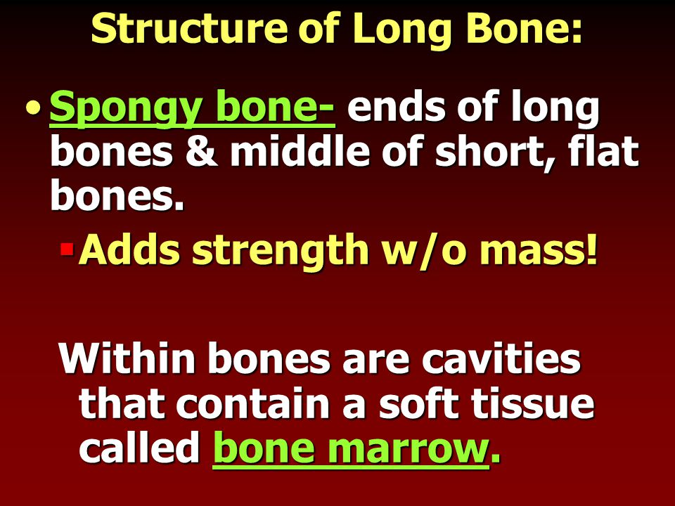 Structure of Long Bone: