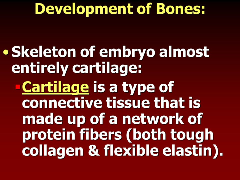 Development of Bones: Skeleton of embryo almost entirely cartilage: