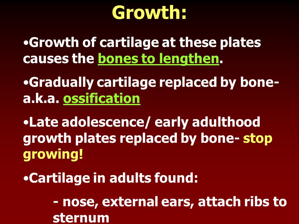 Growth: Growth of cartilage at these plates causes the bones to lengthen. Gradually cartilage replaced by bone- a.k.a. ossification.