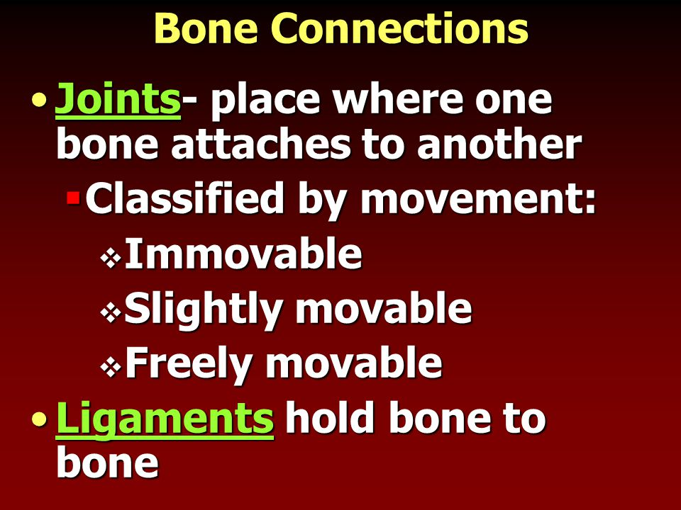 Bone Connections Joints- place where one bone attaches to another. Classified by movement: Immovable.