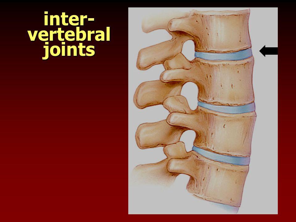 inter-vertebral joints